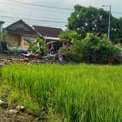 Tanah Sedang Promo Di Tegal Besar (27268447) di Kab. Jember