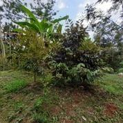 Tanah Strategis Gunungpati Unnes (27277395) di Kota Semarang
