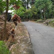 Tanah Letter C - Bonus Rumah Tuwa - Nego (27347231) di Kota Yogyakarta