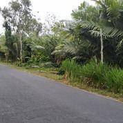 Tanah 3OOm, Bonus Pohon Besar - Investasi Top (27378223) di Kota Yogyakarta