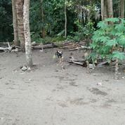 Tanah Bonus Rumah Tua _ Harga BAgus Lokasi Good (27378383) di Kota Yogyakarta