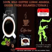 Kopi Luwak Arabica Toraja , Coffee Luwak Bali , Cofee Luwak Gayo , Dan Coffee Luwak Robusta Dampit (27381495) di Kota Jakarta Selatan
