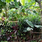 Tanah Di Lenteng Agung Jln Syukur Jakarta Selatan (27596695) di Kota Jakarta Selatan