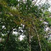 Tanah Kebun Durian Di Kerjo Karanganyar (27723111) di Kab. Karanganyar