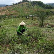 """SEGERA BERINVESTASI KAVLING PRODUKTIF """"GRAND ANDALUSIA VILLAGE"""" (27865671) di Kab. Bogor"""