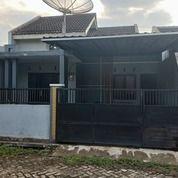 Rumah Jember Tengah Kota Murah (27871939) di Kab. Jember
