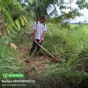 Jasa Potong Rumput Serang (27922599) di Kota Serang