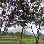 Tanah SHM Di Prigen LUAS, VIEW BAGUS, COCOK BANGUN VILLA ESTATE/TEMPAT WISATA (27978335) di Kab. Pasuruan