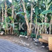 Tanah Pakisaji Tanjung Bungkak Dekat Akasia Sedap Malam (28088255) di Kota Denpasar