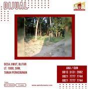 TANAH PERKEBUNAN MURAH POLL JIWUT BLITAR (28213355) di Kota Blitar
