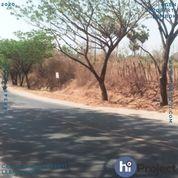 Tanah Pinggir Jalan Di Unter Iwes Sumbawa T472 (28249127) di Kab. Sumbawa