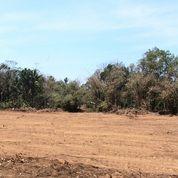 Kavling Perumahan Area Bandara YIA : Potong Harga 25% (28560347) di Kota Yogyakarta