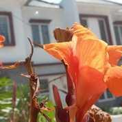 Rumah 2 Lantai Nyaman Asri (28645347) di Kota Bogor