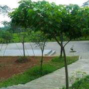Tanah Strategis Dataran Tinggi Kawasan Wisata Alam Mojogedang Karanganyar (29000726) di Kab. Karanganyar