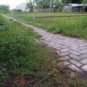 Pekarangan Pribadi Siap Bangun Perbatasan Tulangan Jatikalang Prambon Sidoarjo Jawa Timur (29033525) di Kab. Sidoarjo