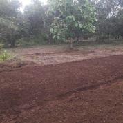 Tanah 11450m2 Timbuseng - Balangpapa Gowa. (29040732) di Kab. Gowa