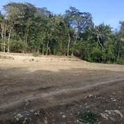 Beli Tanah Kapling Jogja 3 Unit Gratis 1, Jaminan Untung Tiap Tahun (29041911) di Kab. Kulon Progo
