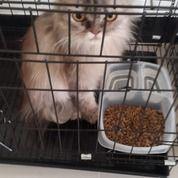 Penitipan / Penginapan Kucing Surabaya Timur (29058511) di Kota Surabaya