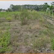 Tanah Termurah Free BPHTB Site Lokasi Rapi 300 Meter Candi Prambanan (29102528) di Kab. Sleman