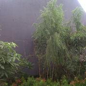 taanaman liang liu,salix (2910415) di Kota Tangerang