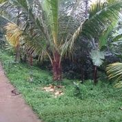 Tanah Perkebunan Di Cugenang, Cianjur (29116953) di Kab. Cianjur
