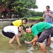 Wisata Pulau Pramuka Menanam Pohon Mangrove (29132012) di Kota Jakarta Timur