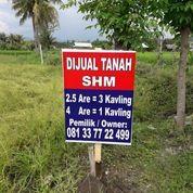 Tanah Kavling SHM Sangat Cocok Dan Baik Untuk Investasi (29166377) di Kab. Lombok Utara