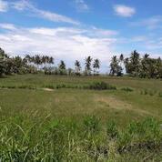 Tanah Sangat Baik Untuk Investasi Di Lombok Utara (29169769) di Kab. Lombok Utara