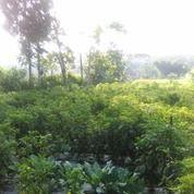 Tanah 4500 M2 Serbaguna (29184196) di Kota Malang