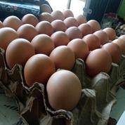 Grosir & Eceran Telur Berbagai Ukuran (29184508) di Kab. Tanjung Jabung Barat