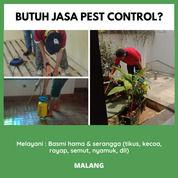 Jasa Basmi Semut Dan Kecoa Area Malang (29227265) di Kota Malang