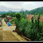 Tanah Lahan Kebun Kopi Luas Di Ngantang Malang (29256093) di Kab. Malang