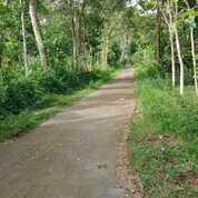 Tanah Perkebunan Luas Di Donomulyo Kabupaten Malang (29262520) di Kab. Malang