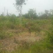 Tanah Idaman Nuansa Komersil (29279158) di Kota Palembang