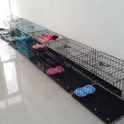 Penitipan / Penginapan Kucing Surabaya (29392345) di Kota Surabaya