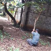 Tanah Di Bantar Gebang, Bekasi (29399916) di Kota Bekasi