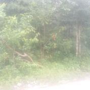 Tanahku, Idamanku WOW (29411978) di Kota Palembang