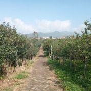 Kebun Apel Produktif Dekat Wisata Air Terjun Conan Talun Kota Batu (29412624) di Kota Batu