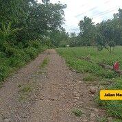 Investasi Kavling Tanah Green Herbal Village Dekat BTP (29423399) di Kota Makassar