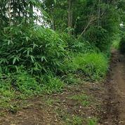 Tanah Murah Karangploso Cocok Untuk Perumahan Dan Tanah Kavlingan (29434466) di Kota Malang