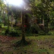 Tanah 44 Are Kebun Buah Buahan Pemepak Lombok Tengah (29451706) di Kab. Lombok Tengah