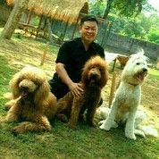 DOG TRAINER / PELATIH ANJING JAKARTA (29485681) di Kota Jakarta Barat
