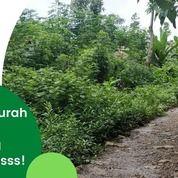 Lahan Kavling Kampung Herbal Di Dekat Makassar Bonus Tanaman Herbal (29522065) di Kab. Pangkajene Kep.
