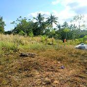 Tanah Lokasi Jl. Ganet - Tanjungpinang (29561147) di Kota Tanjung Pinang