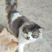 Lepas Adopsi Kucing Jantan Umur 1 Tahun (29598517) di Kota Padang