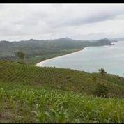 Tanah 120 Are Full View Pantai Pengantap (29627760) di Kab. Lombok Barat