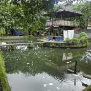 Tanah Di Lingsar Jl Gora 2 (29669754) di Kab. Lombok Barat