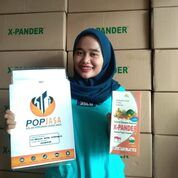 Jasa Urus PT Padang (29676534) di Kota Padang Panjang
