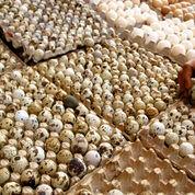 Telur Burung Puyuh Fress (29685054) di Kab. Pekalongan