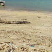 Tanah Kavlingan Sekotong Beach (29731300) di Kab. Lombok Barat